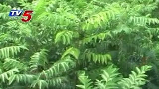 Curry Leaf Plants Cultivation Tips | Annapurna : TV5 News