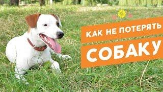 Повышаем шансы найти потерянного питомца: адресники, клеймо, чипирование(https://pethouse.ua/shop/sobakam/amuniciya/kulonyiadresniki/