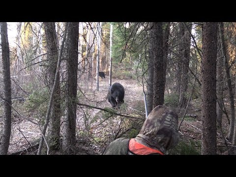 LOOK OUT! MONSTER BLACK BEARS RUNS RIGHT AT US IN SASKATCHEWAN, CANADA.