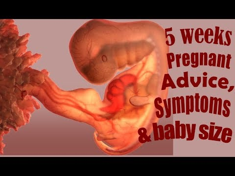 5 Weeks Pregnant Advice, Symptoms What To Expect 5 Weeks Pregnant Symptoms 5 Week Pregnant Baby Size