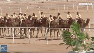 Camels race in Egypt's Sharm El-Sheikh
