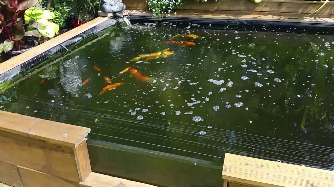 Sleeper koi pond raised with window youtube for Koi pond window