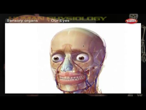 Sensory Organs | How Human Body Works | Human Body Parts And Functions | Human Anatomy 3d