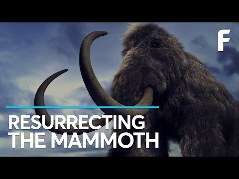 Harvard Says It Can Resurrect Woolly Mammoths