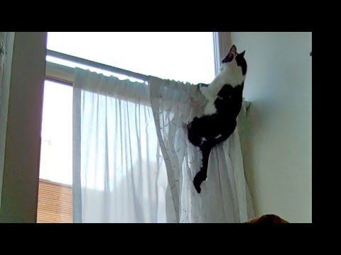 Good-bye Curtains!