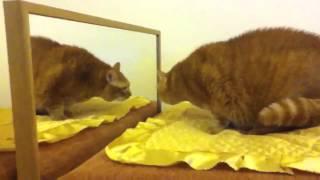 Большой кот и зеркало