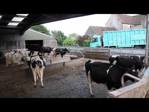 Interview: Peter Alvis of Lye Cross Farm cheese