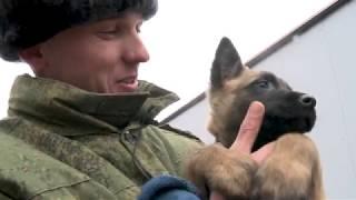 Росгвардейцы сняли новогодний фильм об овчарке
