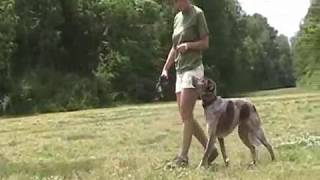 Unleashed Unlimited Dog Training - Fun With Rudy Tootie