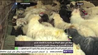 جولة في سوق المواشي بدولة قطر قبيل عيد الأضحى