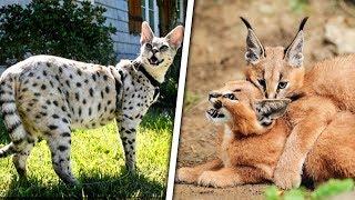 top 7 gatos salvados de la muerte