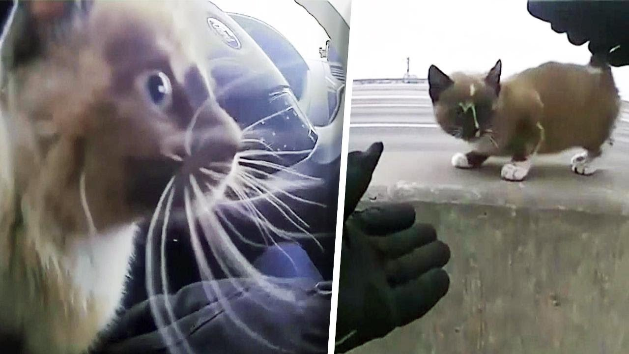 rescued-kitten-accidentally-sets-off-cop-car-s-siren