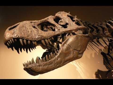 Palaeobiology | Wikipedia audio article