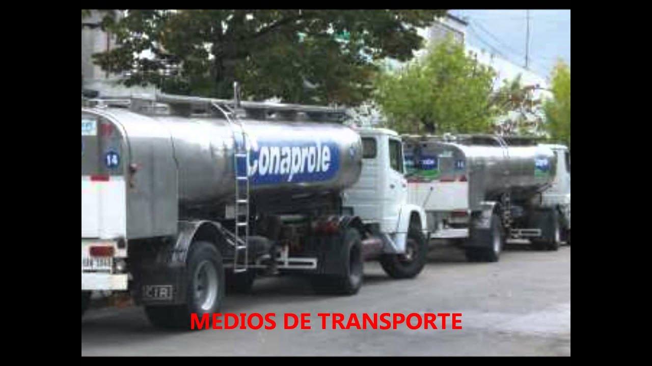 Circuito De La Leche : Proceso productivo leche