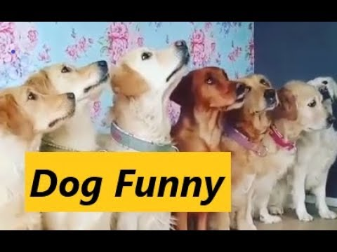 Ultimate Animal Reactions & Bloopers of Octorber 2018 | Funny Pet Videos 2018