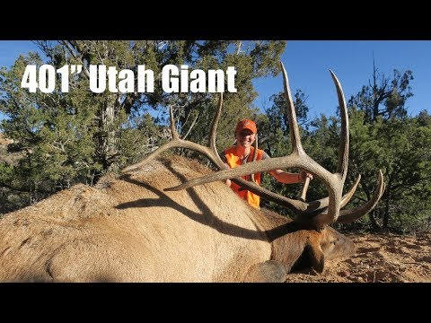 """401"""" GIANT UTAH TYPICAL Bull Elk harvest by Connor Belnap - Tines Up"""