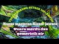 Kombinasi Full Tembakan Kenari Cililin Jenggot Ciblek Kicaw Mania Dan Gemericik Air 100 Ampuh Audio(.mp3 .mp4) Mp3 - Mp4 Download