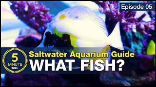 5 beginner fish EVERY saltwate…