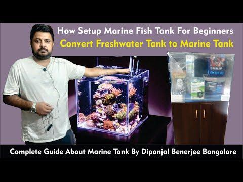 How To Setup Marine Tank For Beginners | Budget | Convert Freshwater To Marine Aquarium | Cost Of It