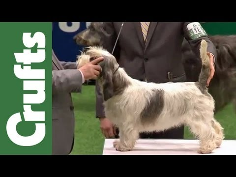 Group Judging (Hound) and Presentation - Crufts 2012