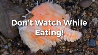 Shrimp Parasite Removal TikTok Compilation March 2020