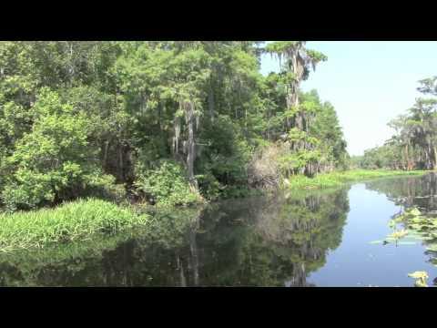 The Okefenokee Swamp 2012 (Backroad Treasures)