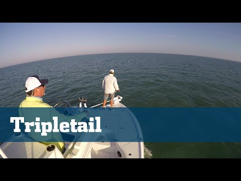 Everglades Tripletail Fishing - Florida Sport Fishing TV