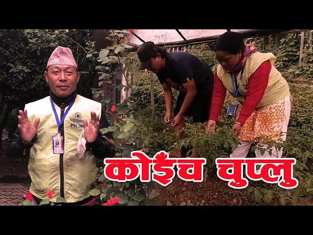 आत्मनिर्भरकालागि युवाहरू कृषिमा आकर्षित । Koinch Chuplu  Episode 71