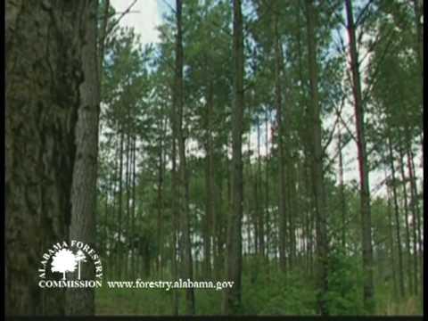 Alabama Forests