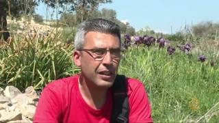 هذا الصباح - زهرة السوسن في فلسطين