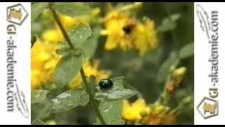 006 - Лечебные растения.