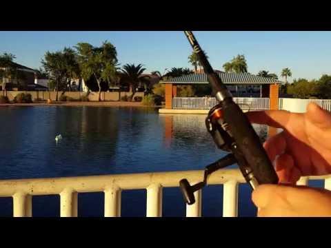 Fishing at McQueen Park In Gilbert AZ | Shimano R4000 Review