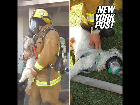 Pooch brought back from death's door by fast-acting firefighters | New York Post