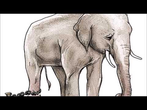 El elefante encadenado cuentos cortos youtube for El elefante encadenado