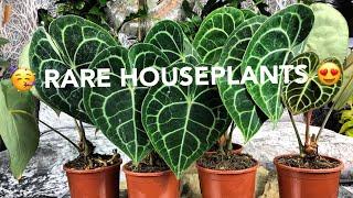 RARE HOUSEPLANTS & CARE! Calathea orbifolia / pink princess philodendrons / anthurium clarinervium