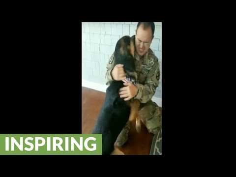 Soldier reunited with dog after 9 months apart