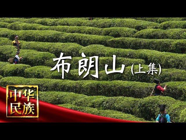 《中华民族》 布朗山 上集:大山中的千年茶农 帮扶工程中迎来新机遇 20190520 | CCTV