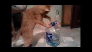Кот Семён против бутылок