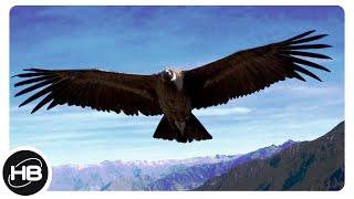 Птицы с Самым Большим Размахом Крыльев. ТОП 10