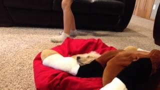 Dognapped part 1