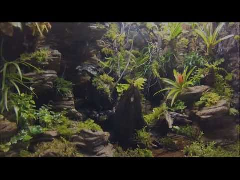 Terrarium tropical with artificial rock background