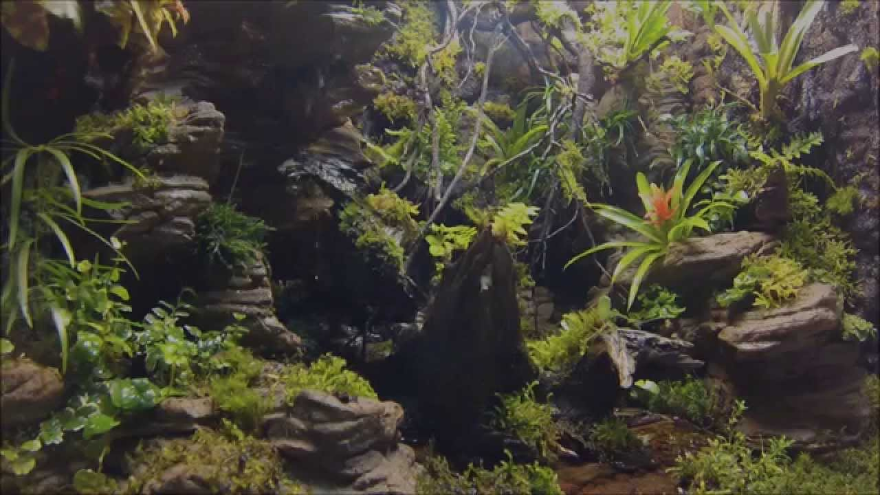 Terrarium Tropical With Artificial Rock Background Youtube