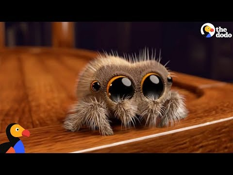 Lucas The Spider Creator Explains How He Makes People Fall In Love With Spiders   The Dodo