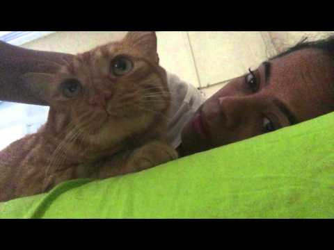 Sahibiyle Konusan Kedi BOB :)