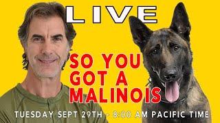 So You Got a Malinois LIVE