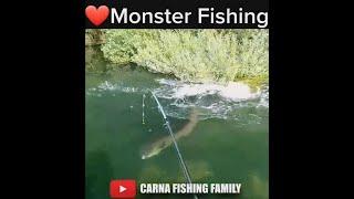 BIG FISH STRIKE fishing fish shorts