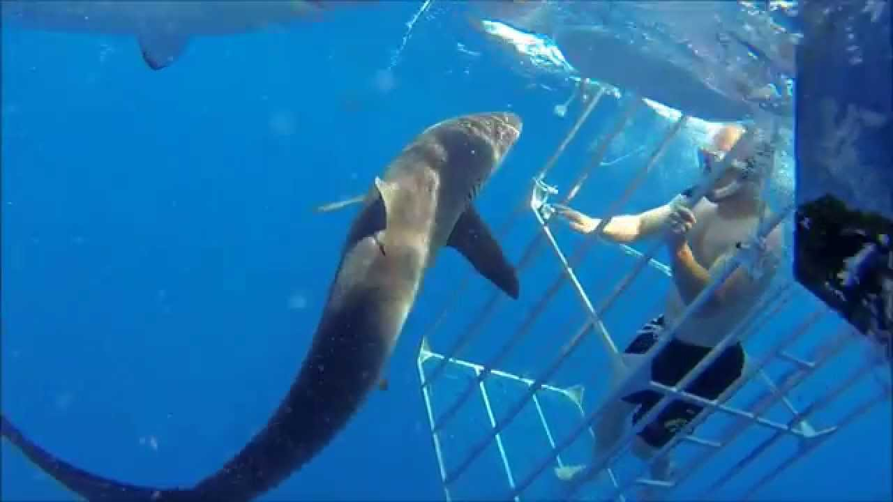 Florida Shark Cage Diving Youtube