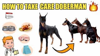 How to take care doberman pinscher | In Hindi | Doberman care tips | Doberman take care health