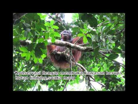 GEO 2010 1001850 NIA AMELIA KERUSAKAN FLORA DAN FAUNA DI INDONESIA