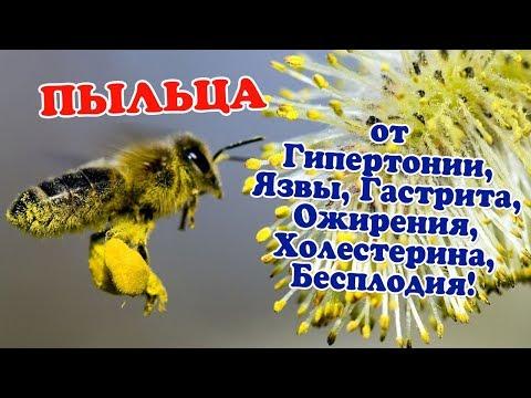 Как принимать пчелиную пыльцу для иммунитета